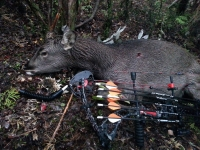 sika spiker 2014 bow